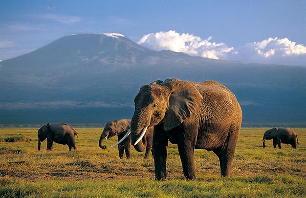 10 самых смертельно опасных существ в мире