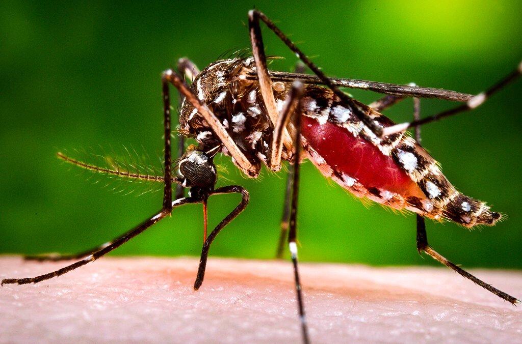Комары москиты