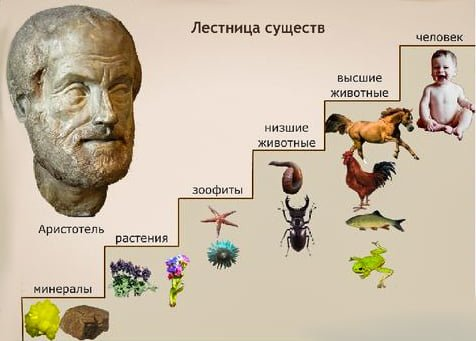 Аристотель и его учения о животном мире