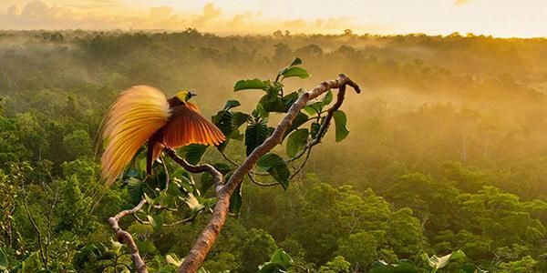 12 самых красивых птиц в мире