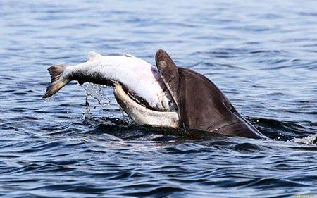 что едят дельфины