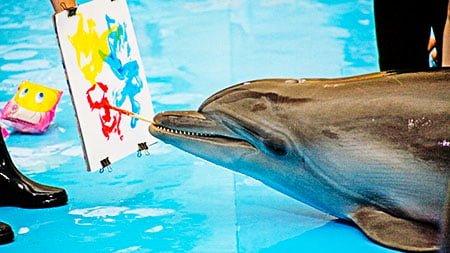 Дельфины   интересные факты