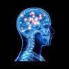 Мозг Человека | 10 интересных фактов