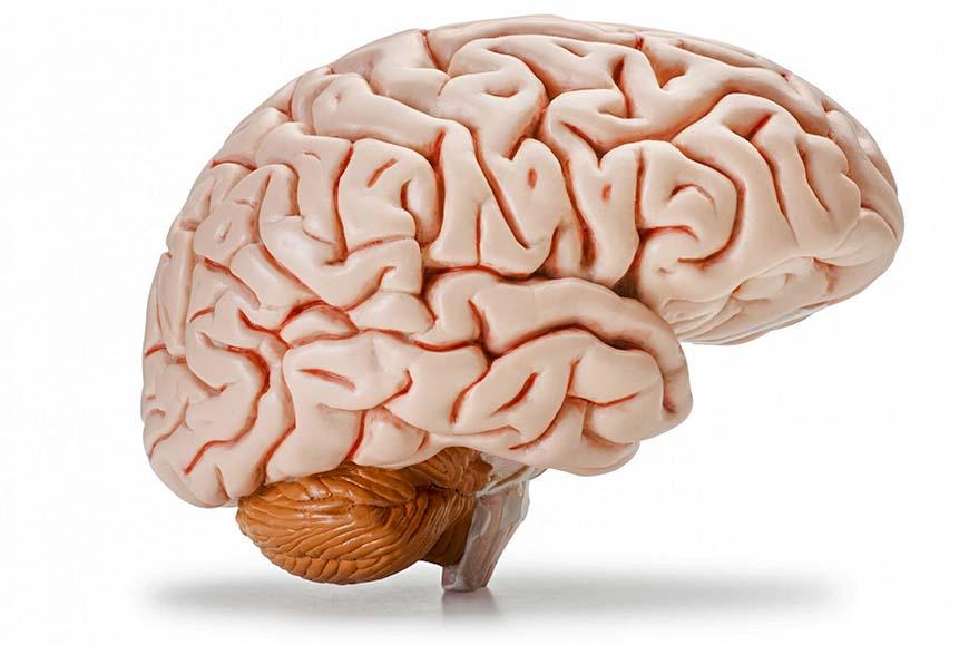 Мозг не мышца